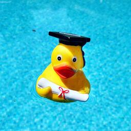 Gummiente in Pool